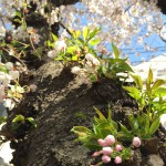 春分(2015/3/21)