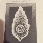 エーテル体の科学的証拠
